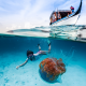 underwater, diving, ocean, boat, jellyfish, snorkeling wallpaper