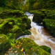 moss, stream, river, nature, river wharfe, strid wood, bolton abbey, wharfedale, yorkshire dales wallpaper