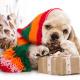 american cocker spaniel, dog, christmas, new year, hat, cone wallpaper