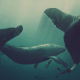 whale, diver, artwork, underwater wallpaper