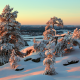 finland, lapland, winter, sunset, snow, tree, nature wallpaper