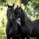 horse, couple, love, tenderness, animals wallpaper