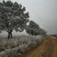 winter, ice, fog, snow, tree, frost, mist, nature wallpaper