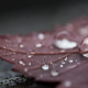 leaf, dew, drop, water drop, macro, rain, nature wallpaper