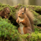 squirrel, moss, tree, animals wallpaper