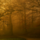 landscape, nature, fall, park, trees, mist, benches, morning, path, grass wallpaper
