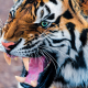 tiger, teeth, animals wallpaper