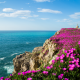 cantabria, spain, flowers, bay of biscay, sea, cliff, rock wallpaper