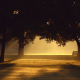 trees, sunlight, mist, photography, benches, sunset wallpaper