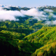 mountain, hill, trees, forest, mist, photography, landscape, nature wallpaper