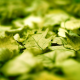 leaves, macro, green, sunlight, blurred, photography wallpaper
