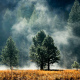 mist, forest, sunlight, nature, landscape wallpaper