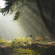 sunlight, path, spruce, forest, landscape wallpaper
