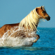 horse, running, beach, water splash, sea, animals wallpaper