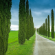 photos, italy, tuscany, road, nature, cypress wallpaper