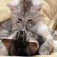 two kittens in love, kitten, animals, cat wallpaper