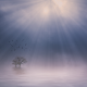nature, sunbeams, mist, lake, sunrise, landscape, trees, atmosphere, birds, flying, calm, morning wallpaper