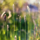 grass, insects, spikes, bokeh, nature wallpaper