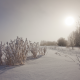 winter, nature, bushes, sun, snow wallpaper