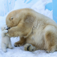 animals, polar bear, zoo, bear, knut, berlin zoo, baby polar bear wallpaper