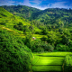 rice terraces, landscape, forest, field, nature, summer wallpaper