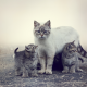 cat, kittens, animals, cats family wallpaper