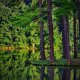 summer, trees, forest, lake, reflection, spruce, landscape, nature wallpaper