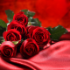 roses, flowers, bouquet, red roses wallpaper