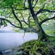 alone, trees, moss, lake, mountain, nature, landscape wallpaper