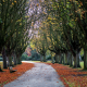 park, oxford, cowley, autumn, tree, alley, nature wallpaper