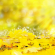 autumn, leaves, yellow, glare, leaf wallpaper