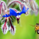 incect, macro, bee, flight, flowers wallpaper
