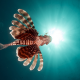fish, lionfish, underwater, animals, lion fish, sea wallpaper
