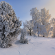 tree, nature, snow, winter, a lot on snow, sweden wallpaper