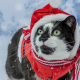 cat, costume, green eyes, santa claus, new year, santa hat, christmas, snow, animals wallpaper