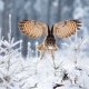 owl, forest, winter, spruce, bird, animals, snow wallpaper