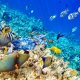 coral reef, underwater, fish, sea, tropical fishes, animals wallpaper