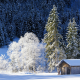 nature, winter, mountains, germany, bavaria, snow, hut, forest, tree wallpaper