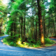 nature, trees, forest, Oregon, USA, road, light trails, branch, plants, HDR, pine trees, moss, long  wallpaper