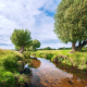 nature, landscape, river, field, grass, tree wallpaper