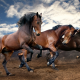 horse, beauty, animals, clouds wallpaper