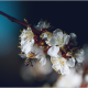 spring, bee, branch, flowers, nature wallpaper