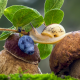 mushroom, nature, boletus, snail, leaves, berry, blueberry, macro wallpaper