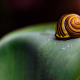 snail, seashell, macro wallpaper