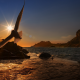 embankment, sun, bird, evening, sea, seagull wallpaper