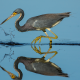 heron, bird, animals, reflection wallpaper