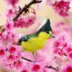 taiwanese tit, bird, branch, cherry, spring, flowering, animals wallpaper