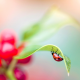 macro, plant, leaf, ladybug, insect, animals wallpaper
