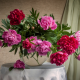 peony, table, vase, flowers, peonies wallpaper