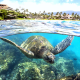 turtle, animals, underwater, ocean, shore, palm, coral reef wallpaper
